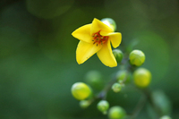 涼しげな花を ・・