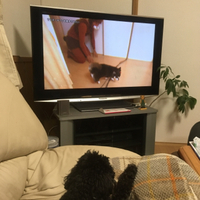 ヤンキー犬vsアル