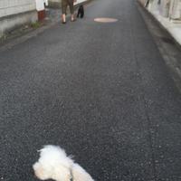 わんこズでの散歩