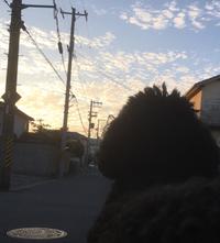 黒わんこと夕焼け