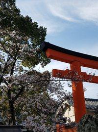 氏神さまの桜