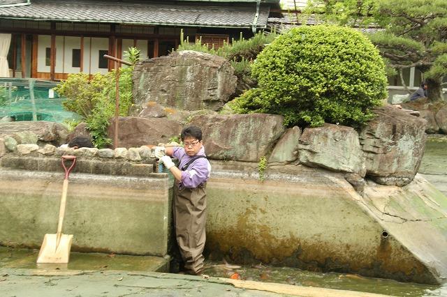 中野BC,日本庭園,和歌山,海南,長久邸,池,庭,鯉,清掃,白鳥