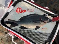 ★市江のグレ釣り40cm確保 今年も食いは悪そう
