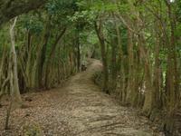 熊野古道をご案内します