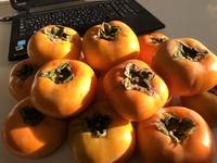 九度山の柿