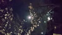 藤白神社さんの夜桜