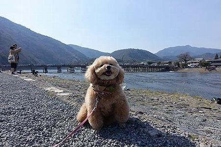「三人八脚梅の旅」3日目京都~嵐山&平野神社にて