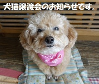 本日保健所にて、譲渡会開催!!