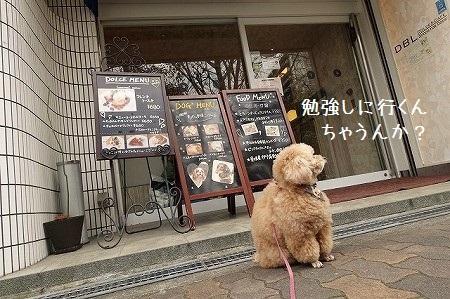 靭(うつぼ)公園向かいのドッグカフェにて☆