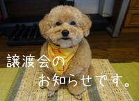 保健所犬猫譲渡会開催☆熊本の被災犬も~