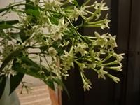 夜来木の花