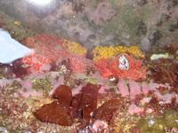 密かに生き延びるサンゴ