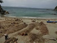 浜のお掃除