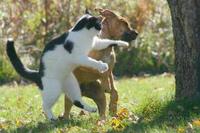 ★猫と犬は仲良しがいいね★