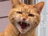 ★猫仏の顔もにゃんどまで・・・★
