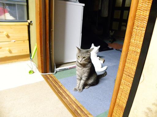 ラインのスタンプと猫