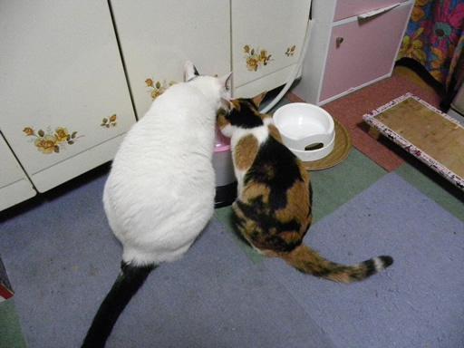 仲良猫と~ラインのスタンプ