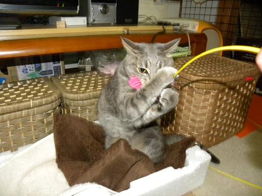 猫とラインのスタンプ