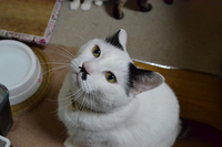 猫って( *´艸`)