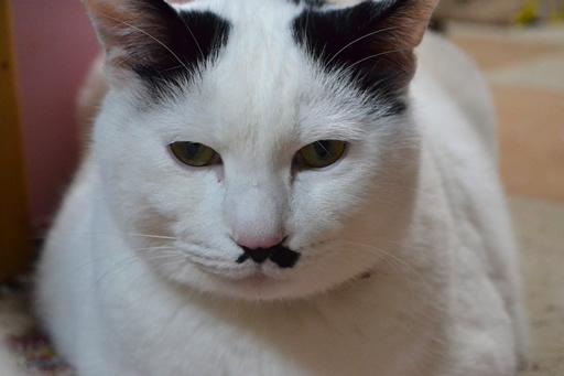 猫、いい顔