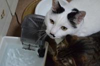 かわいい猫の顔