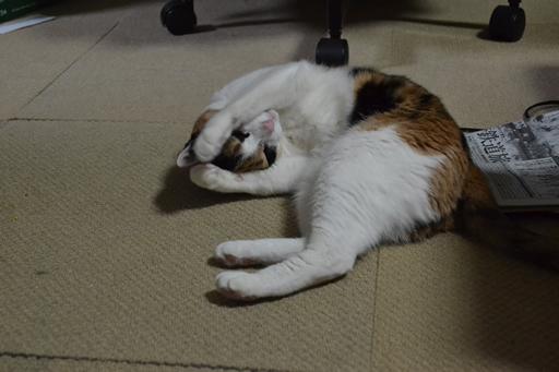 カワ(・∀・)イイ!!猫