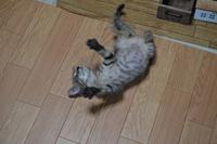 子猫は本当にカワ(・∀・)イイ!!