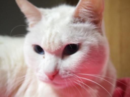 猫の怒った顔