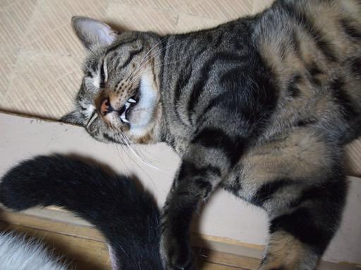 ラインスタンプと猫