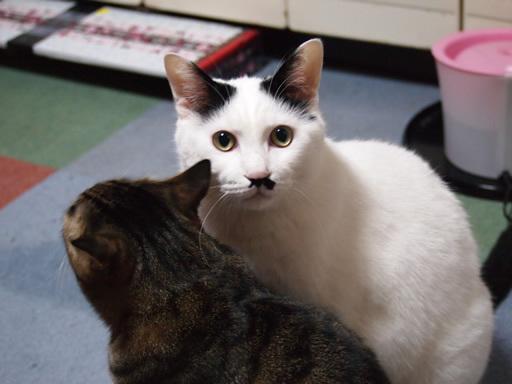 猫とLINEのスタンプ