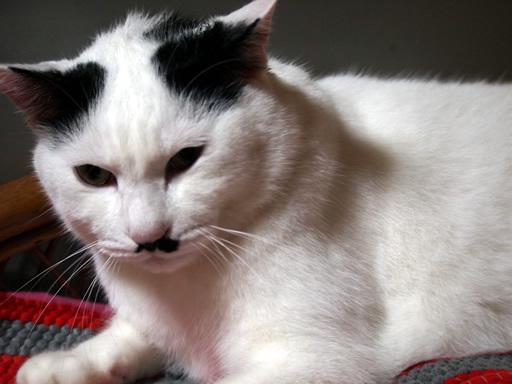 怒ってる!猫