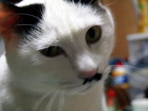 猫で~す^^
