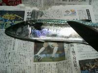 サゴシVS庖丁人ぺコだぁぁ〜!