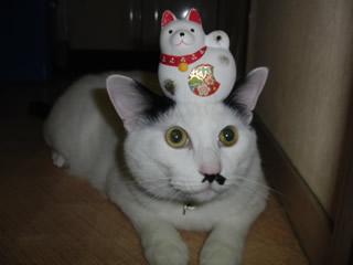 猫♪のっています~