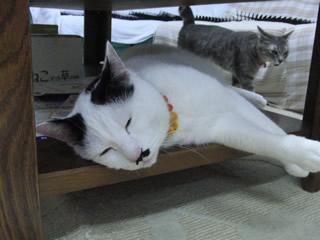 猫の幸せな顔