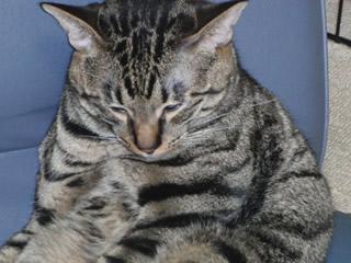 猫の甘えた顔