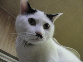 猫も優柔不断