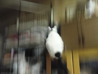 巨大猫が飛んだ!