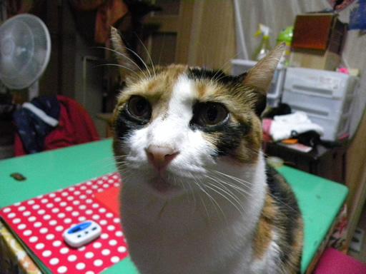 猫の目線は~