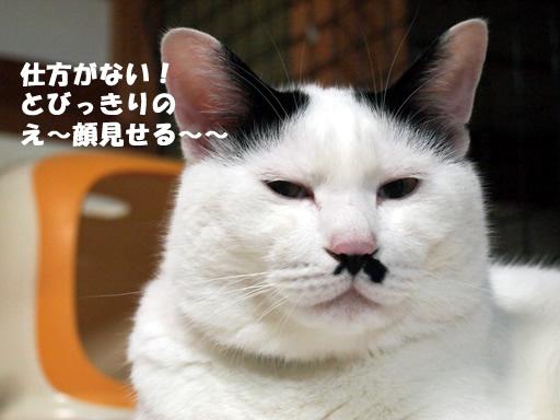 ええ~~顔