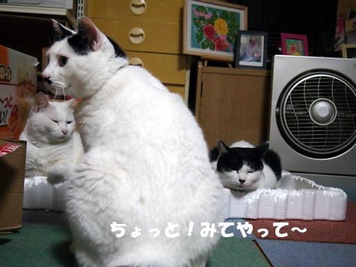 猫のお気に入り