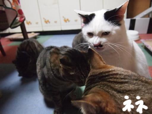 きゃ~~猫の顔!