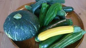 夏野菜続々と。。。
