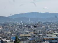 京都、鈴虫寺、亀岡夢コスモス園見物-2