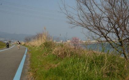 ブログ再開 (紀の川の桃の木)