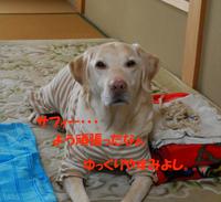 盲導犬の価値