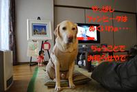 関西盲導犬協会オープンデー
