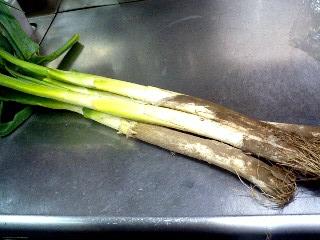 めぬま葱で・・・