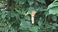 コガタスズメバチの初期巣駆除