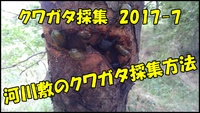 和歌山市でクワガタ採集